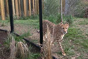 Columbus Zoo: The Heart of Africa is beating strong!
